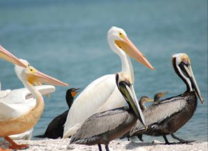 Charlotte Harbor Aquatic Preserves' Nature Boat Tours @ Gasparilla Marina | Placida | Florida | United States