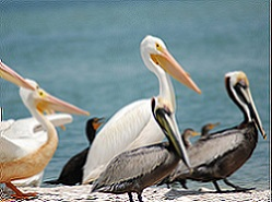 Charlotte Harbor Aquatic Preserves Nature Boat Tour Ecotour @ Gasparilla Marina | Placida | Florida | United States